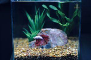 3. Jenis Ikan Hias
